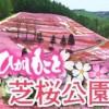 北海道の大空町でシバザクラが見頃 まるで花のカーペット!