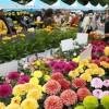23回目を迎える花フェスタ2015札幌が開幕 北海道の初夏を彩るイベント!
